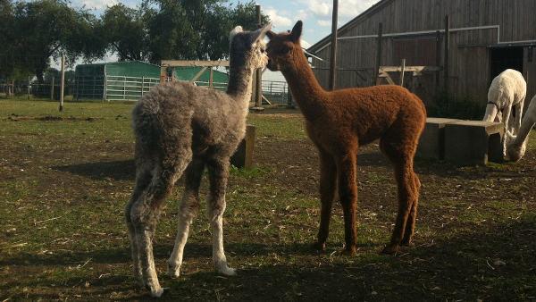 Merlin und Mila