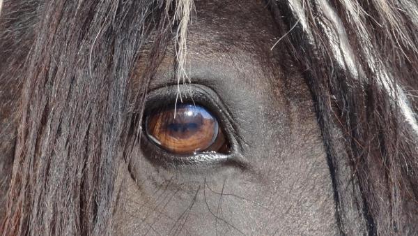 Reittherapie – Pferde